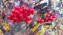 Tapeta Podzimni plody