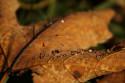 Tapeta Podzimní ráno