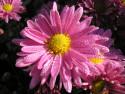 Tapeta Podzimní rosa