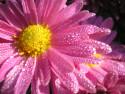 Tapeta Podzimní rosa 3