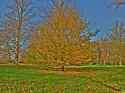 Tapeta Podzimní strom