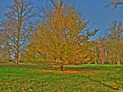Tapeta: Podzimní strom