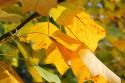 Tapeta Podzimní tapeta