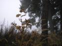 Tapeta Podzimní zákoutí