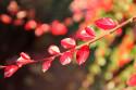 Tapeta podzimnííí