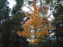 Tapeta Podzim ve Švédsku