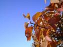 Tapeta Podzim ve Švédsku 4