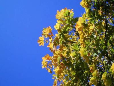 Tapeta: Podzim ve Švédsku 5