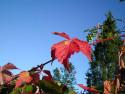 Tapeta Podzim ve Švédsku 6