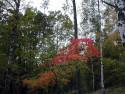 Tapeta Podzim ve Švédsku 7