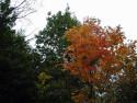 Tapeta Podzim ve Švédsku 8