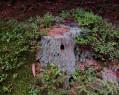 Tapeta Pohádkový lesní domek