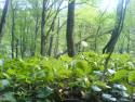 Tapeta pohlad do lesa