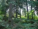 Tapeta Pohled do lesa