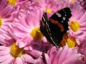 Tapeta Poslední nektar před zimou.. 1