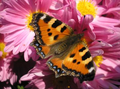 Tapeta: Poslední nektar před zimou.. 2
