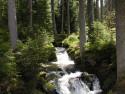 Tapeta Potok v lese