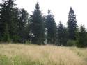 Tapeta Před lesem