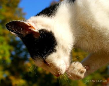 Tapeta: přemýšlí o myškách