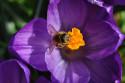 Tapeta Přišlo jaro