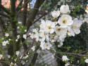 Tapeta Přišlo jaro 2