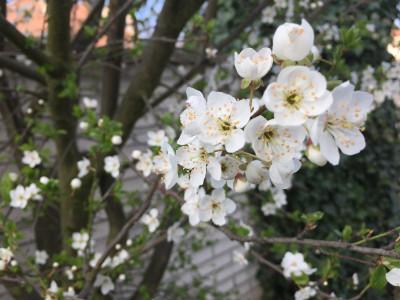 Tapeta: Přišlo jaro 2