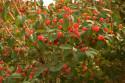 Tapeta První známky podzimu