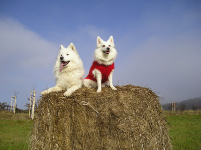 Tapeta: Psi