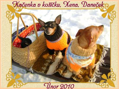 Tapeta: Psi v rodině