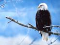 Tapeta Ptáčci