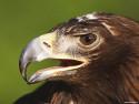 Tapeta Ptáčci 3