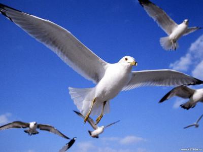 Tapeta: Ptáčci 4