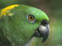 Tapeta Ptáčci 5