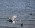 Tapeta Ptáci