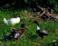 Tapeta Ptáci 3