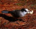 Tapeta Ptáci 4