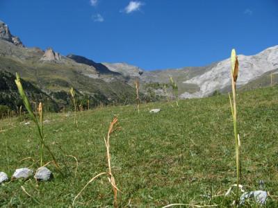 Tapeta: Pyreneje 7