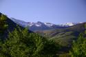 Tapeta Pyreneye 1