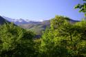 Tapeta Pyreneye 2