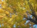 Tapeta Radiměř-podzim 06