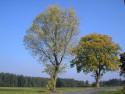Tapeta Radiměř-podzim 10