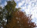 Tapeta Radiměř-podzimní obloha