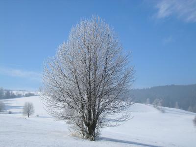 Tapeta: Radiměř-zima nad rančem 04