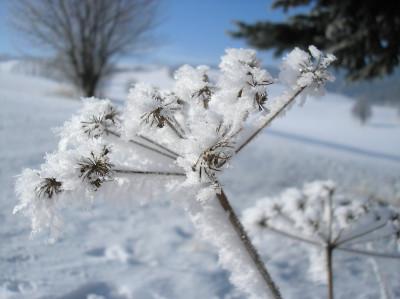 Tapeta: Radiměř-zima nad rančem 07