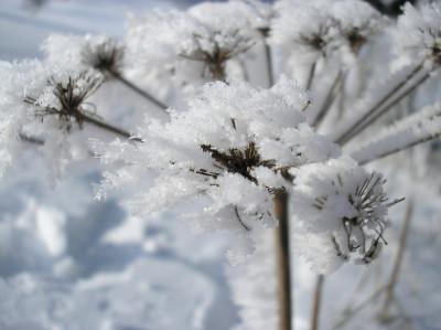 Tapeta: Radiměř-zima nad rančem 08