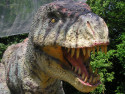 Tapeta Rex 2