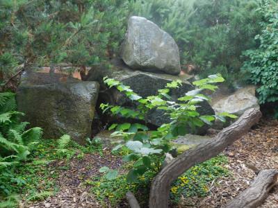 Tapeta: Rostliny s kameny