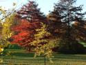 Tapeta Rudý strom
