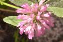 Tapeta Růžový květ 2