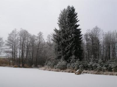 Tapeta: Rybník u obce Doupě 2
